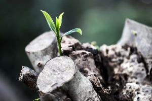 new_life_growth