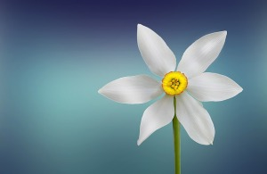 flower_presence