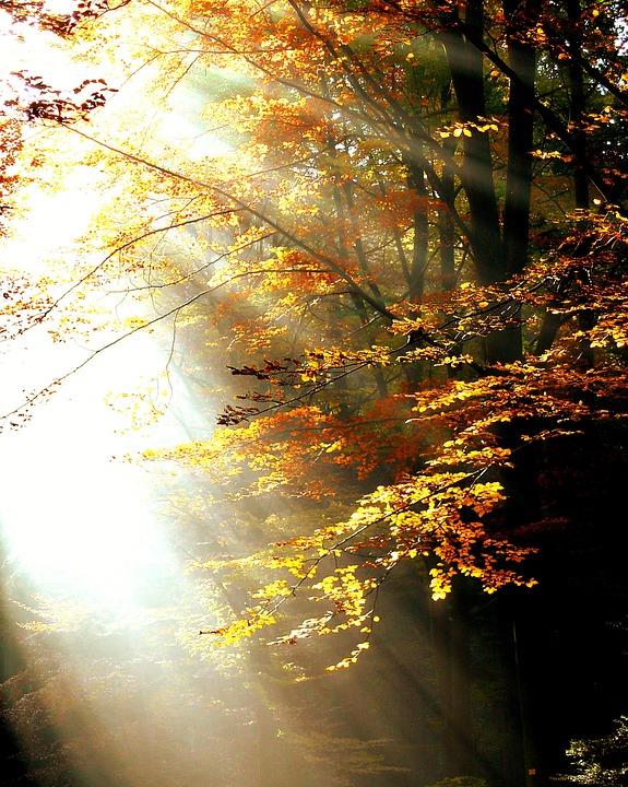 forest_sunlight