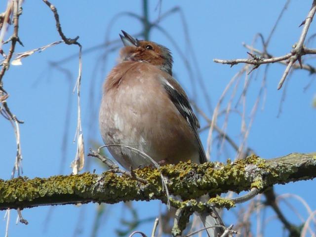 Bird_singing_2