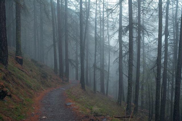 dark_path