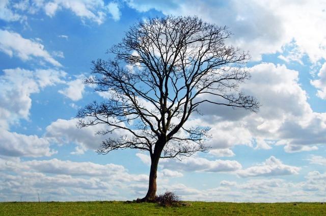 tree_sky_oneness