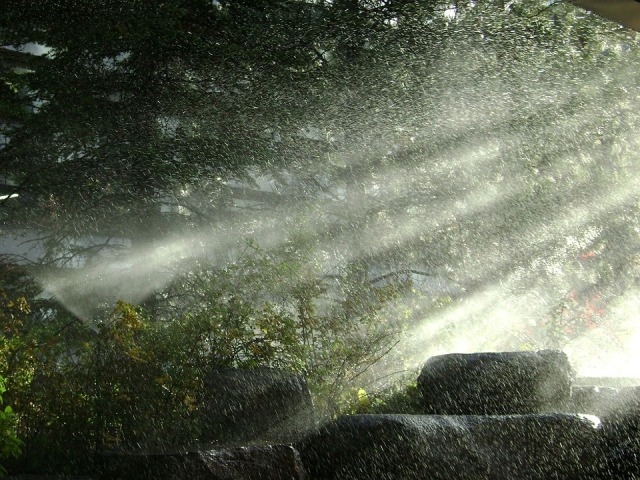 rain_forest_light