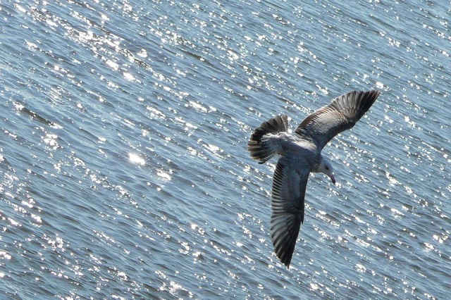 flying_bird_water