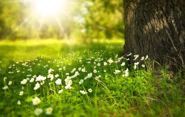 spring_sun_flowers