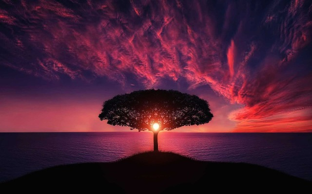 amazing_sky_tree_ocean