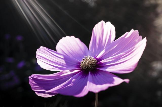 flower_sun_rays
