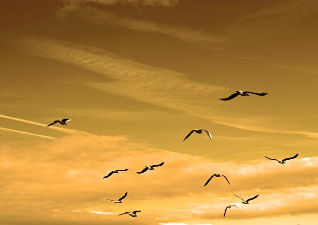 air_birds_sky