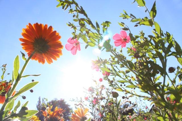 flowers_sun