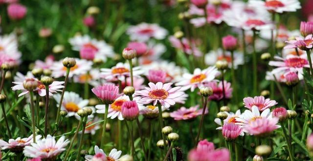 flowers_wild