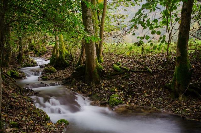 nature_stream_quiet
