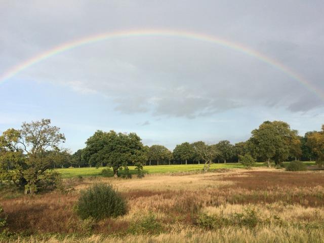 rainbow_trees