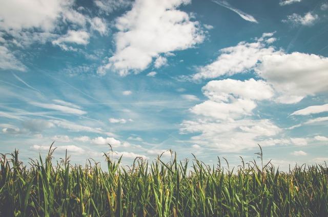 field_harvest_sky