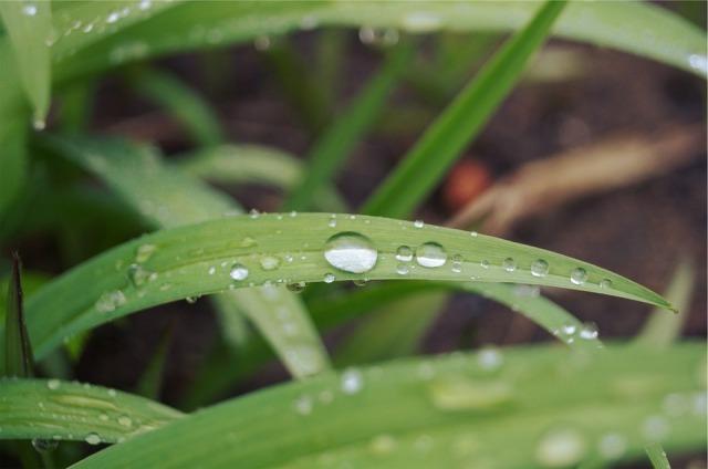 grass_rain_drops