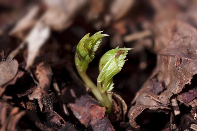 seedling_leaves