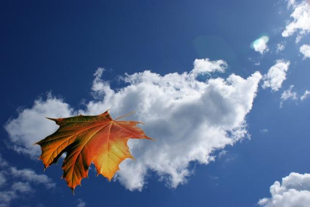 leaf_falling_sky