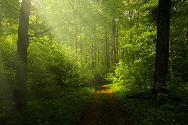 light_forest