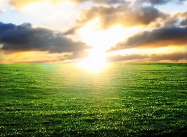 sunset_field