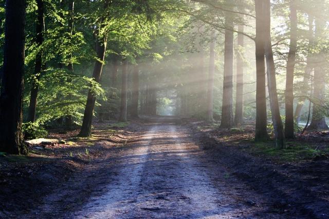 road_trees_rays_sun