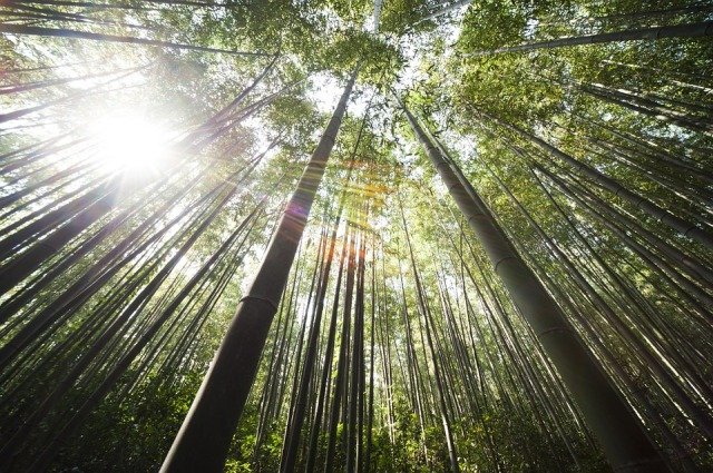 trees_sunlight