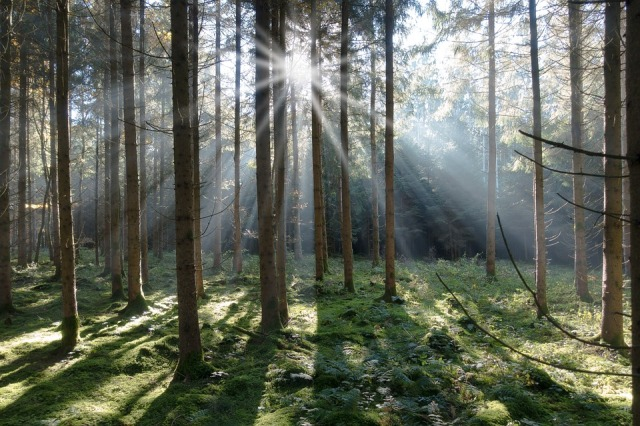 trees_sunshine