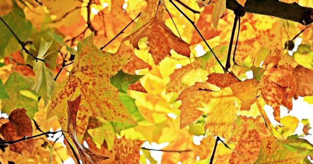 leaves_autumn_colors