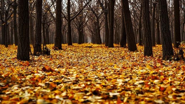 autumn_leaves_ground