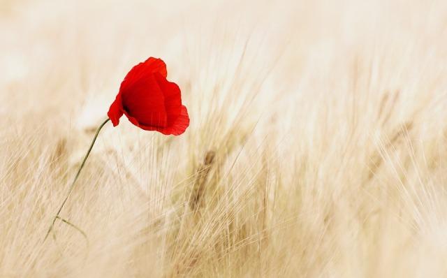 flower_field_grain