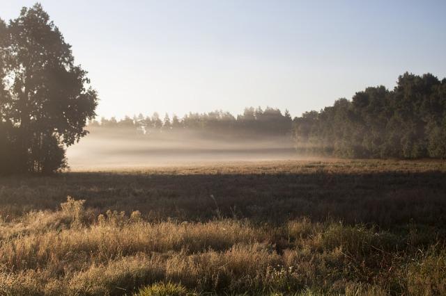meadow_fog
