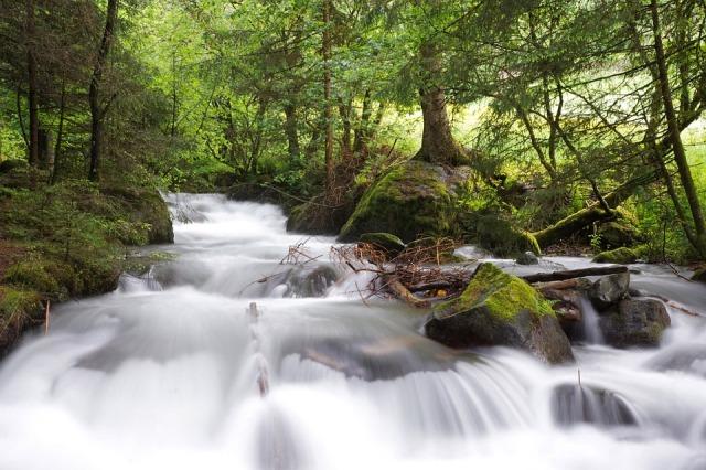 creek_flow_trees
