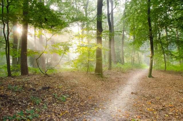 path_woods