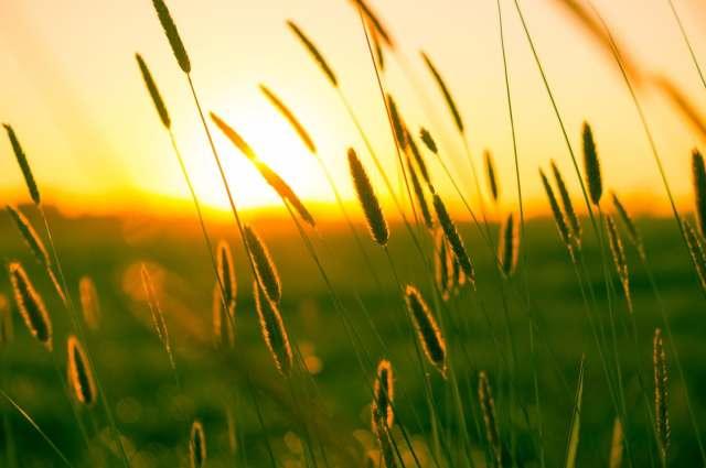 field_sunrise