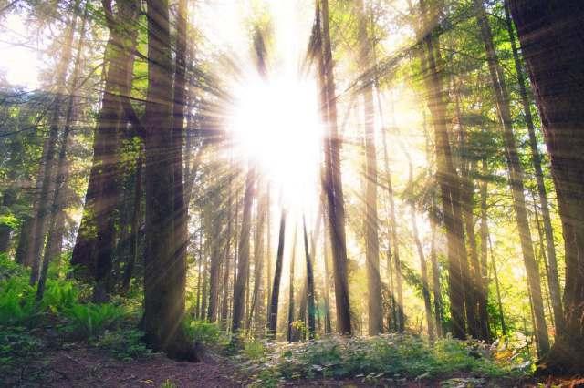 sunshine_trees
