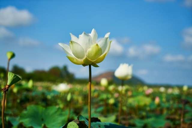 flower_change_growth