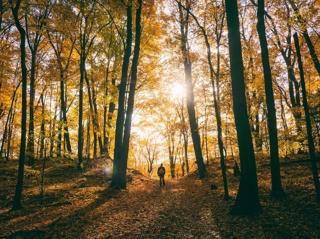 hike_autumn_sun