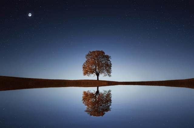 tree_reflection_lake