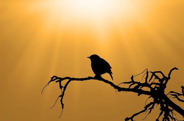 bird_branch_sunshine