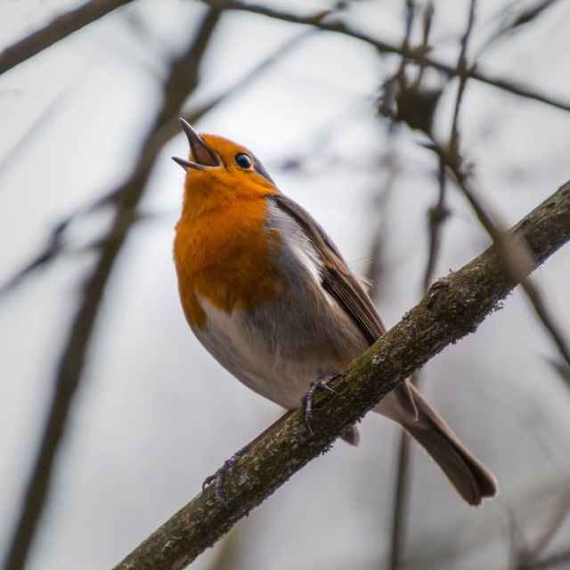bird_singing_branch_sky