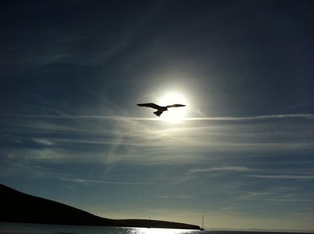 dove_sun_sky