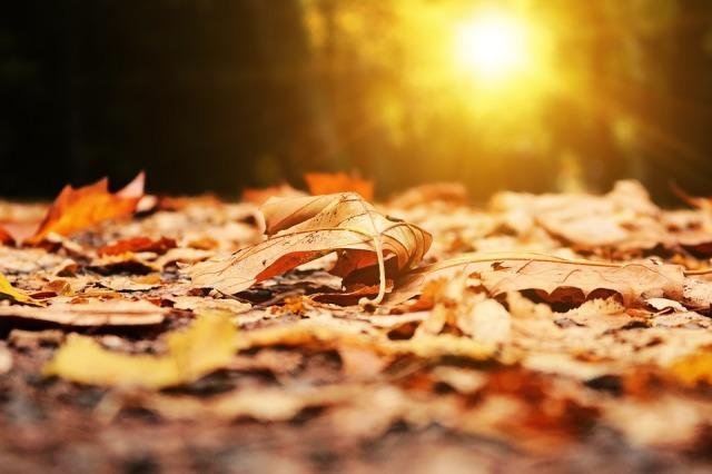 autumn_leaves_sunshine