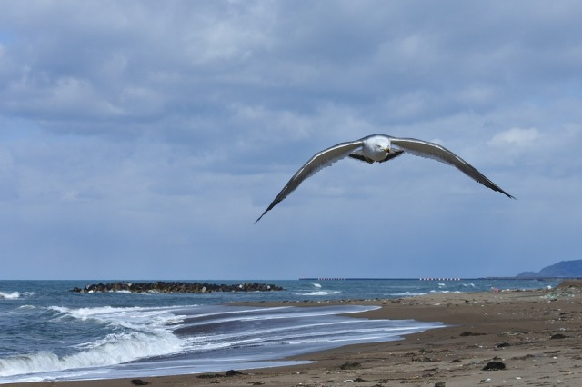 bird_flying_beach