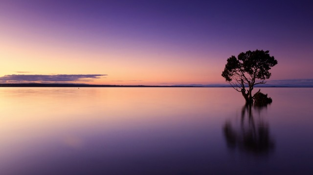 calm_water_tree