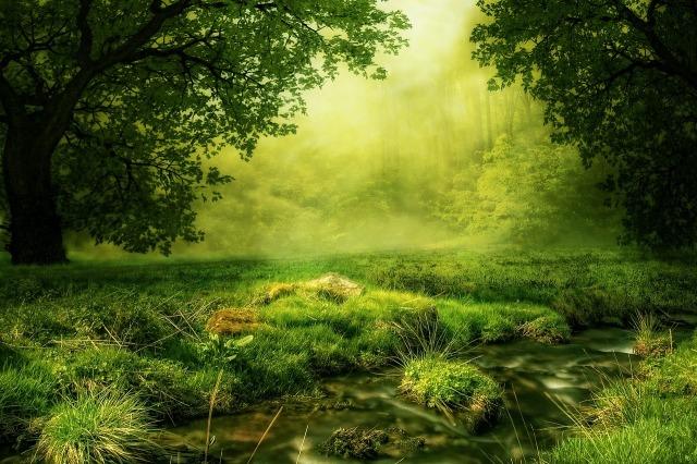meadow_green_trees